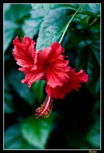 Vivero la Gardenia recibe el sello 70 Aniversario de la Central de trabajadores de Cuba.